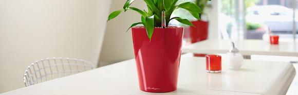 Learn About Lechuza Pots And Planters At Plantercraft – The Widest Selection In Perth